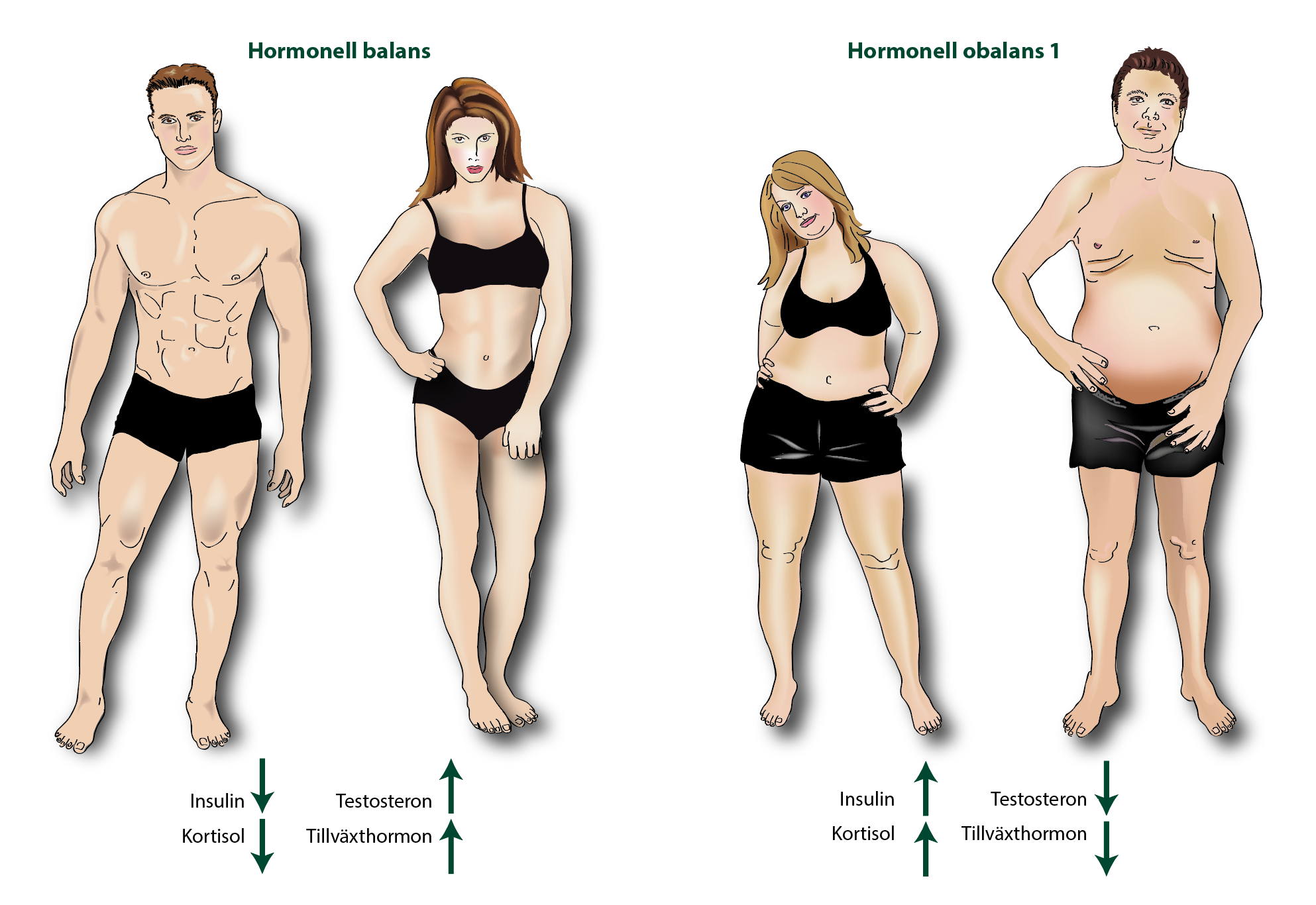 Hormonell balans-obalans