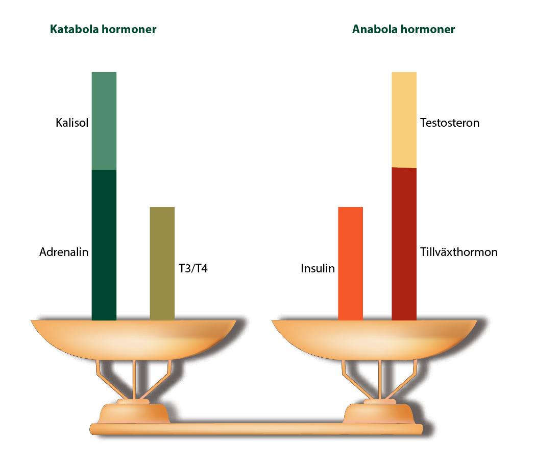 Hormonell balans